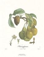 Pears/Frangipane