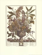 January/Twelve Months of Flowers, 1730