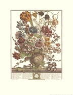 Twelve Months of Flowers, 1730/March