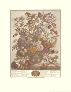 May/Twelve Months of Flowers, 1730