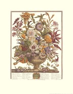 September/Twelve Months of Flowers, 1730