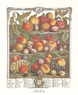 August/Twelve Months of Fruits, 1732