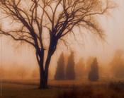 Whisper of Dawn