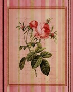 Botanical Rose I