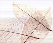 Sheer Leaves III