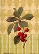 Botanical Cherries