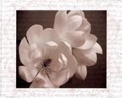 Winter Magnolia II