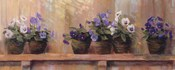 Violets in Pots