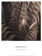 Moonglow II
