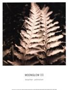 Moonglow III