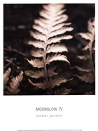 Moonglow IV