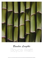 Bamboo Lengths