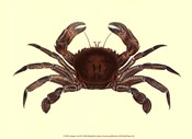 Antique Crab II