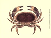 Antique Crab IV