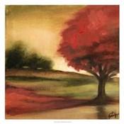 Harvest Maple I
