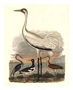 Heron Family III