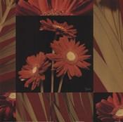 Crimson Gerberas