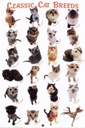 Cat Breeds