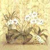 Espirit Orchid