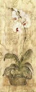 Esprit Phalaenopsis Panel
