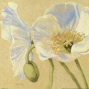 White Poppies I