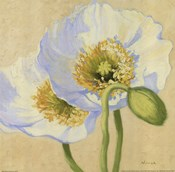 White Poppies III