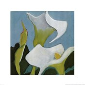 Calla Lillies 4