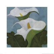 Calla Lillies 5