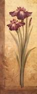Grandiflora I - mini