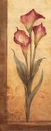 Grandiflora III - mini