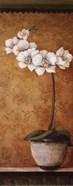 Hanna's Orchids II - petite