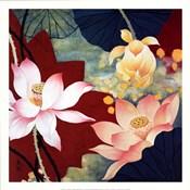 Lotus Dream II