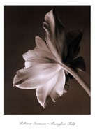 Moonglow Tulip