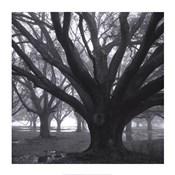 Oak Grove, Winter