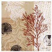 Coral Impressions II