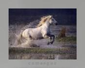 Aquatic Gallop