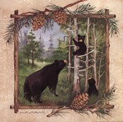 Black Bears II