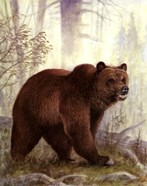 Grizzly Mama