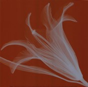Lily/Silver (Sm)