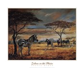 Zebras On The Plains