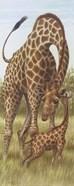 Mama Giraffe With Baby