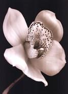 White Black Speckled Flower