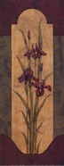 Greek Iris I - Petite