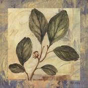Leaf Botanicals I