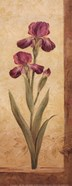 Grandiflora II - Petite