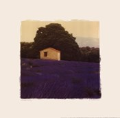 Lavender Country - Mini