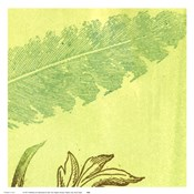 Feather Leaf