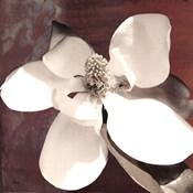 Magnolia Blue I