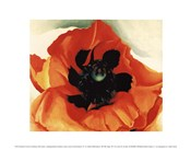 Poppy, 1927
