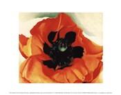 Poppy, 1927